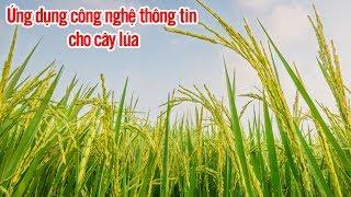 Ứng dụng công nghệ thông tin cho cây lúa