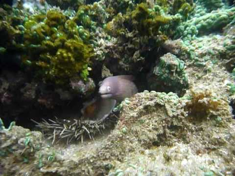 Sri Lanka,ශ්රී ලංකා,Ceylon,Coral Reef,Moray eel (13)