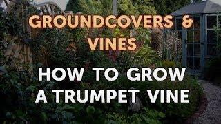 Groundcovers & Vines