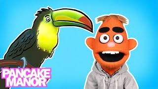 What is a Bird? | Song for Kids | Pancake Manor