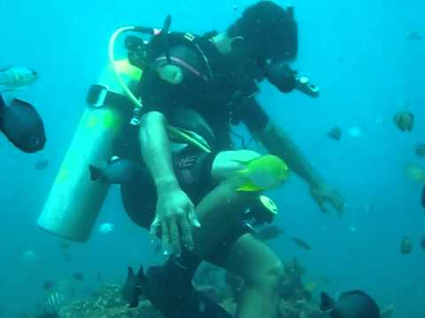 Diving in the Philippines: Medina, Mindanao