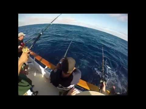 Tuna Fishing, Ocean Odyssey, San Diego, H&M Landing, Mahi Mahi, Yellowfina and Bluefin Tuna