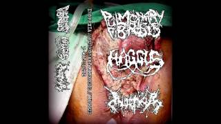Pulmonary Fibrosis / Haggus / Inopexia - 3-way split CS FULL ALBUM (2017 - Goregrind / Mincecore)