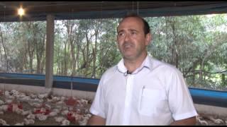 CATI - Revista Casa da Agricultura - Avicultura integração