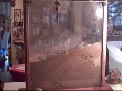 Huge Ant Farm Habitat Day 1 2009