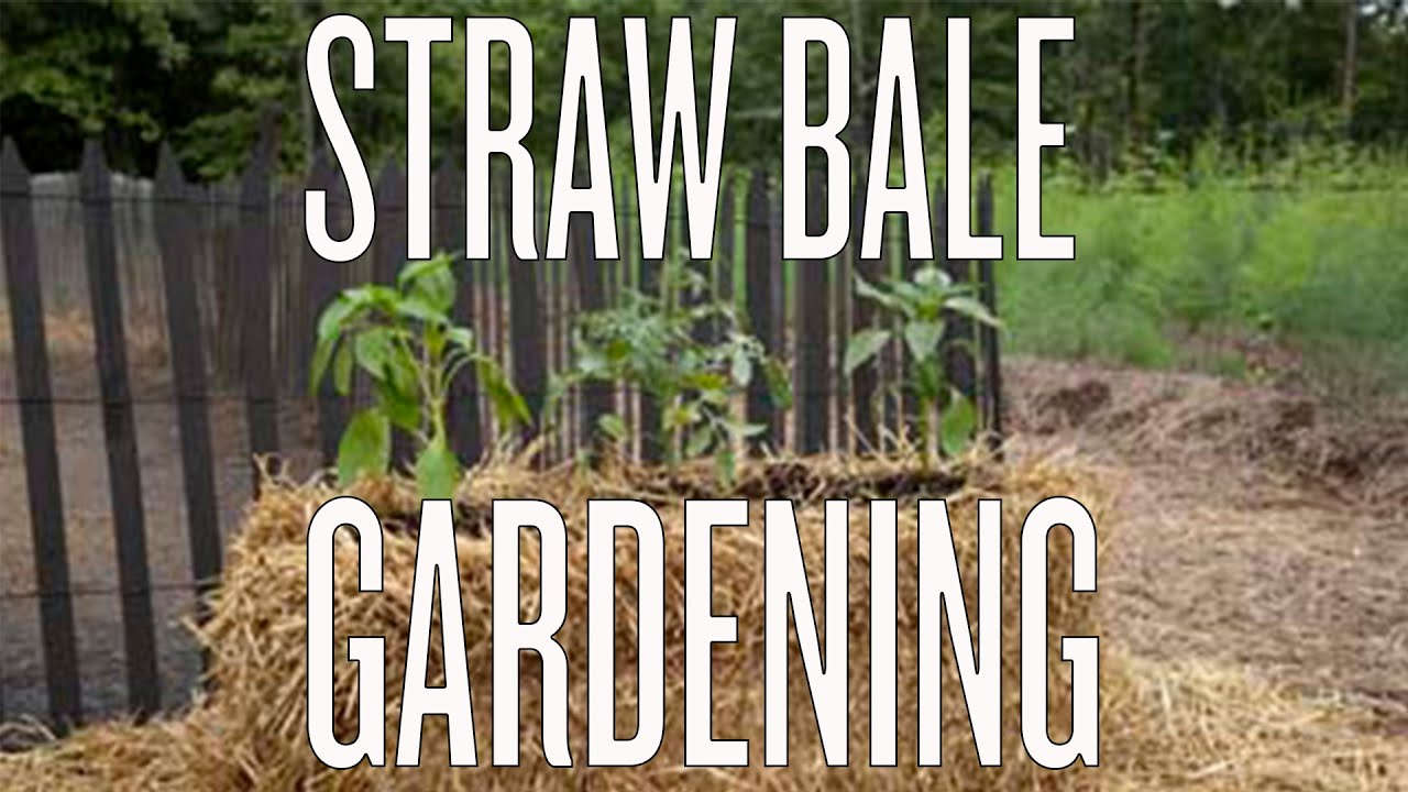 hay bale gardening instructions