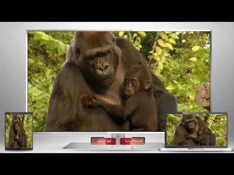 تصنيف الحيوانات حسب نوع غذائها thumbnail