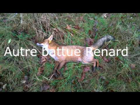 Chasse Renard Meute Chien Courant Saint Plantaire Indre