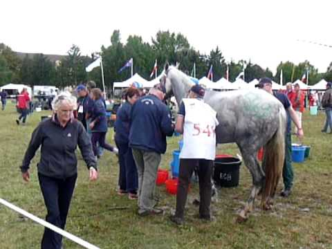 WATERboy Horse Shower in action