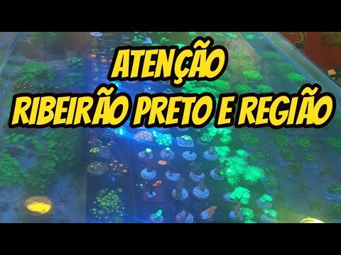 Vamos Reinaugurar A ECO HOBBY Em Ribeirão Preto !