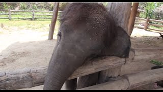 Baby Elephant Tries to Wake up a Sleepy Dog [OFFICIAL]
