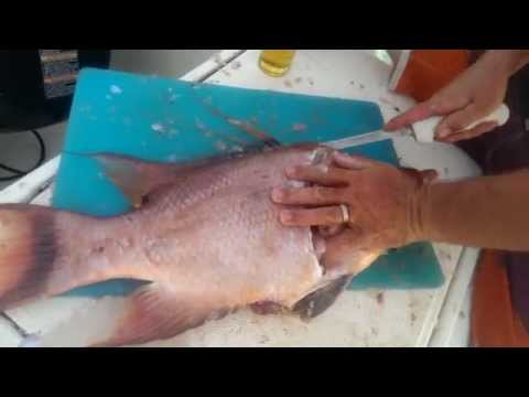 Cleaning fish in the Exumas How to clean and fillet hogfish and grouper