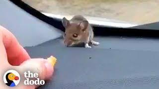 Guy Finds Mouse on His Car Dashboard | The Dodo