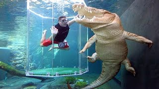 7 Kolam Renang Paling Berbahaya Di Dunia !!! Berani Berenang Bareng Buaya
