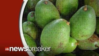 New Study Finds Avocado Provides Key In Curing Form of Cancer