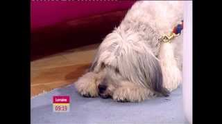 ASHLEIGH & PUDSEY (BRITAIN'S GOT TALENT 2012 WINNERS) INTERVIEW ON LORRAINE.