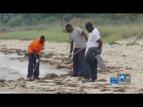 Crews cleaning up menhaden spill on Eastern Shore