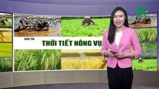Thời tiết nông vụ 20/10/2018: Gia cầm mắc bệnh viêm đường hô hấp mãn tính | VTC14