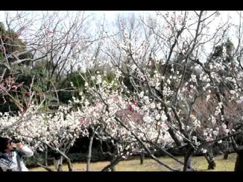 東山動植物園0227 001