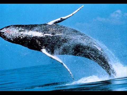Biggest gambling whales