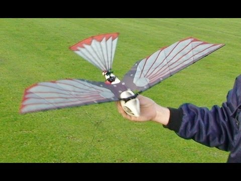 CYBIRD - ORNITHOPTOR - RC ROBOT BIRD AT HDMFC