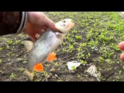 рыбалка на северский донец шахтинске