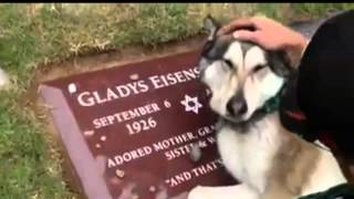 Cachorro chora no túmulo do dono