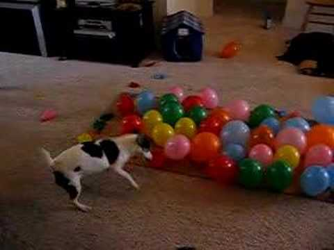 DOG vs. BALLOONS