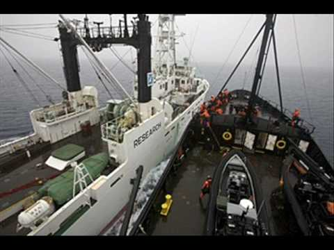Sea Shepherd Clashes and Drives Japanese Whalers Out of Australia's Waters