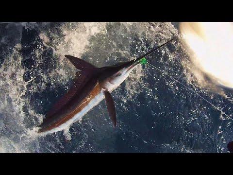 Montauk White Marlin on the Adah K  2015 Summer Highlight 1