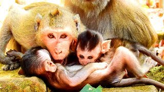 So Poor! Duke and Duches Fighting Eleno Baby Monkey Like This! Baby Scared!