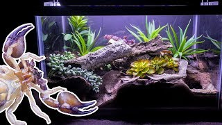 Naturalistic Burrowing Scorpion Vivarium