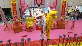 Singapore Wen Yang Twin Lion Leaping on High Pole performances at NorthPoint City on 2/2/19