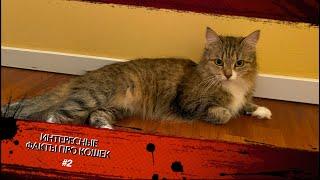 Интересные факты про кошек #2/ Interesting facts about cats