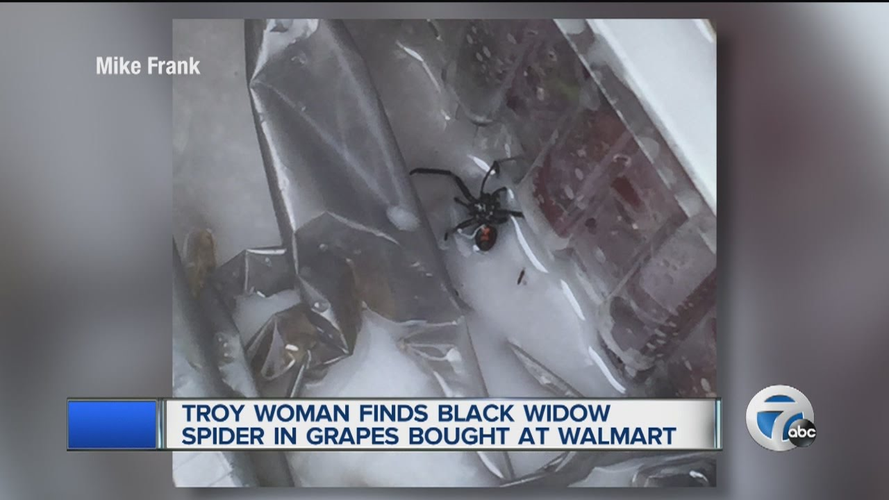 Woman finds black widow spider in bag of grapes from Troy Walmart
