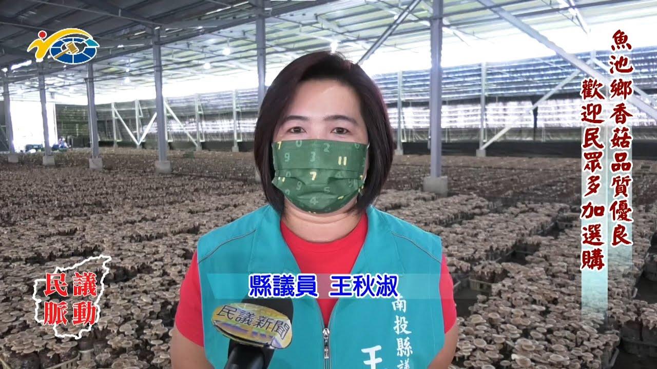 20210707 民議脈動 魚池鄉香菇品質優良 歡迎民眾多加選購 (縣議員 陳淑惠、蕭志全、王秋淑)