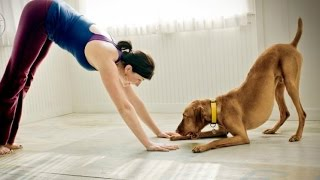 Funny Animals Helping Their Owners Exercise