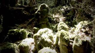 Steadicam Merlin practice footage in Puzzlewood Forest of Dean