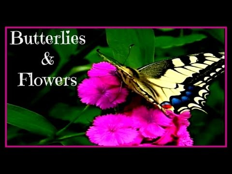BUTTERFLIES On Flowers ... Nature Vid From Gardens Around The Globe (KID FRIENDLY)