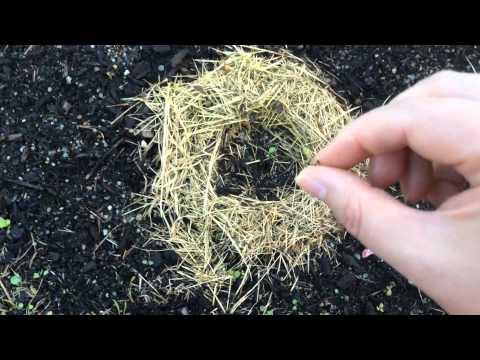 Кто может съедать рассаду огурцов 79