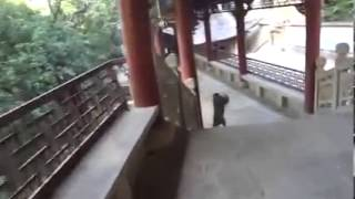 [Don't Trust A Monkey] Video