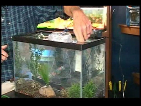 10 gallon fish tank maintenance cloudy water 2017 fish for Fish tank cloudy