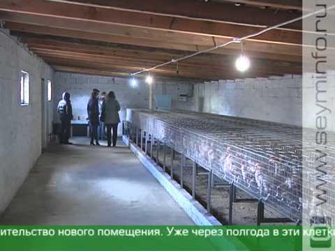 Курский фермер организовал производство яиц