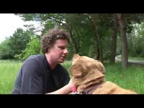 CZEKO szuka domu Sidney Polak poleca do adopcji psa z Palucha
