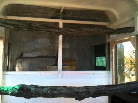 Horse Trailer Chicken Coop Horse Trailer to Chicken Coop