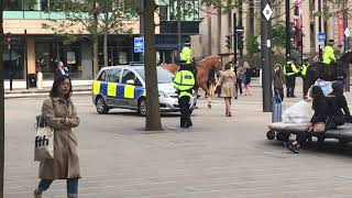 Police Horses on St Peters Square Manchester
