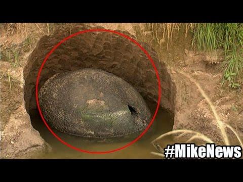 Encuentran Huevo Gigante De Dinosaurio En Argentina - Find Egg Giant Dinosaur In Argentina