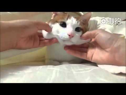むにむに感がたまらない猫のほっぺをつまむ癒し系動画