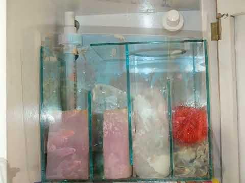 sistema de filtracion de mi acuario