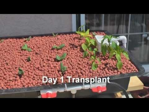 Aquaponics Systems - Aquaponics Made Easy With This Aquaponics Systems !